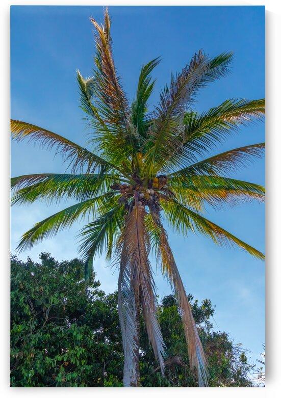 Beautiful Palm by Nicholas