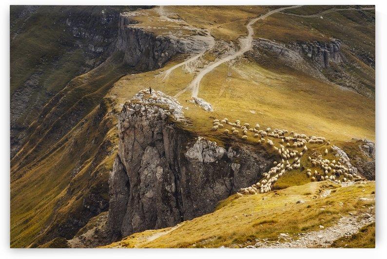 Alpine Pastures by mihai ian nedelcu by 1x