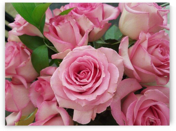Rose Garden by Emily Johnson