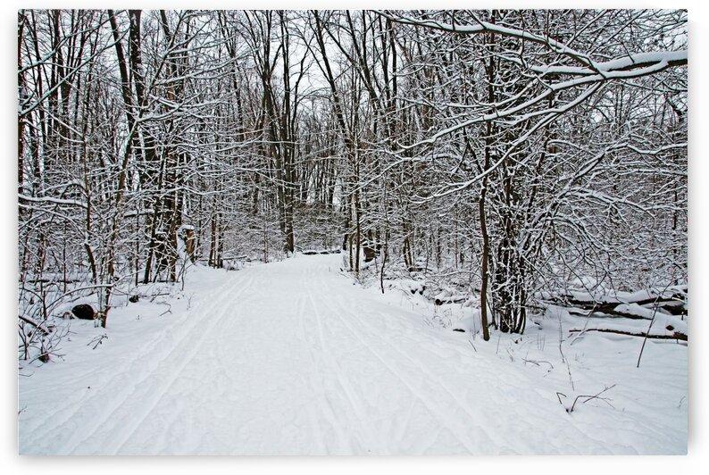 Walking A Winter Trail I by Deb Oppermann