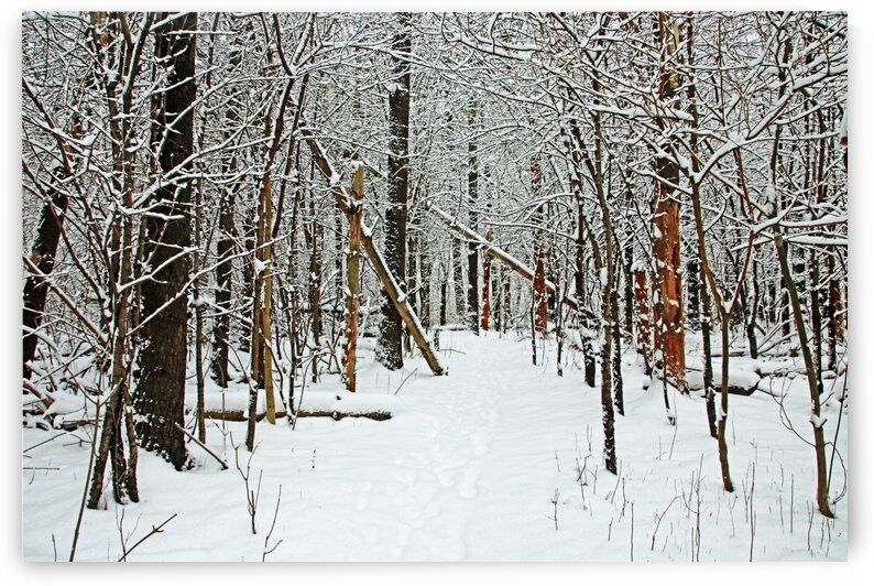 Cold And Crisp Winter Forest by Deb Oppermann