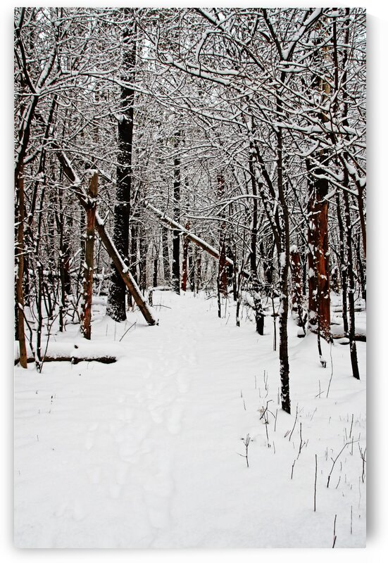 Cold And Crisp Winter Forest I by Deb Oppermann
