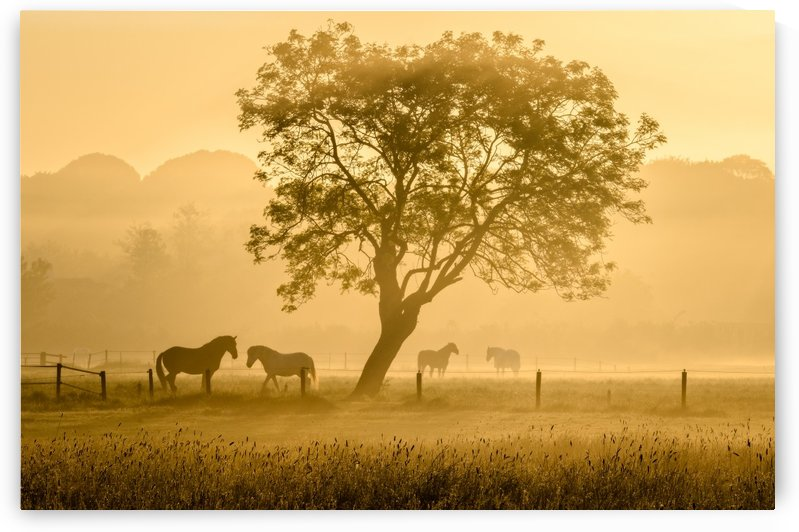 Golden Horses by 1x
