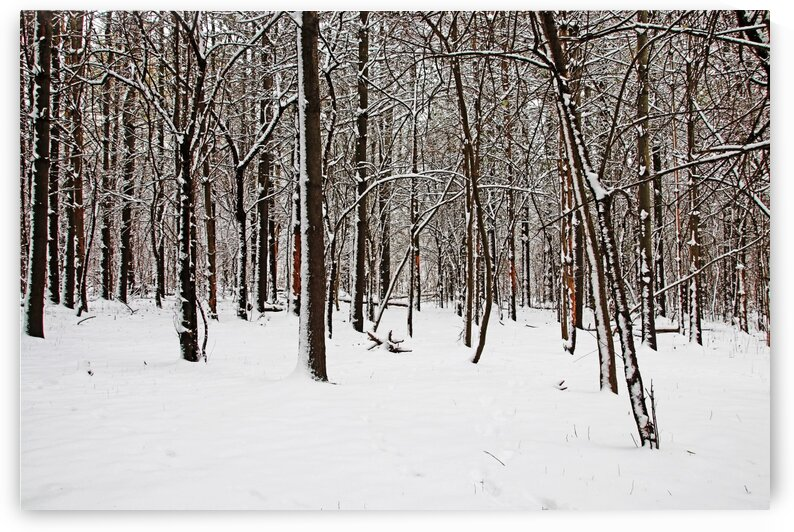 The Browns Of Winter I by Deb Oppermann