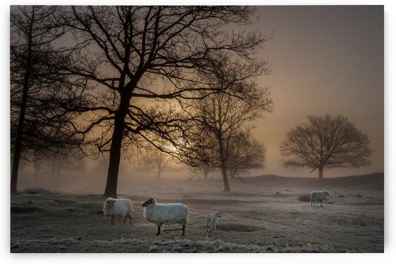Foggy Morning by 1x