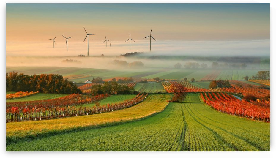 Autumn Atmosphere in Vineyards by Matej Kovac  by 1x