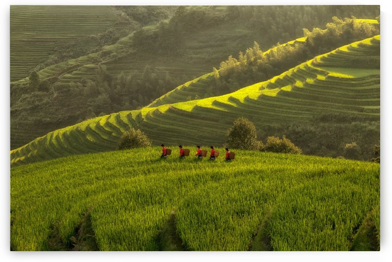 Five Ladies in Rice Fields by Max Witjes  by 1x