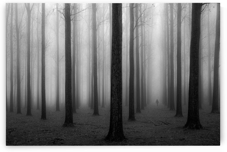In a Fog by 1x