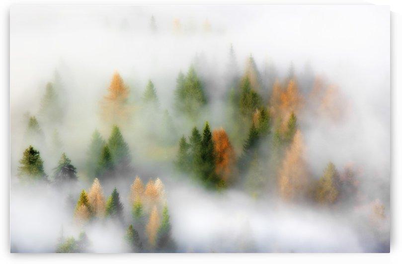 Autumn Dream by 1x