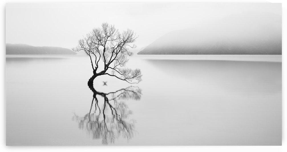 Serenity by 1x