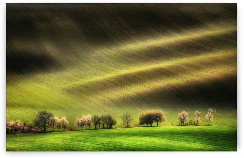 Moravian Fields by 1x