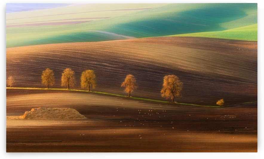 Moravian Trees by 1x