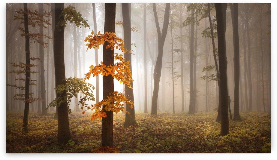 In November Light by 1x