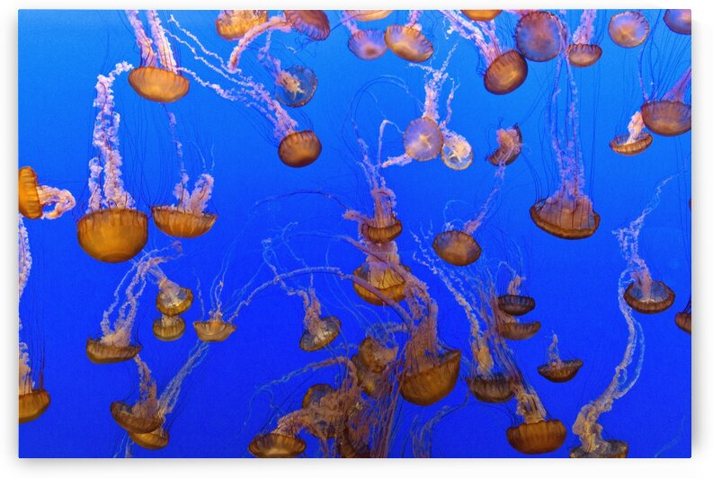 For displaying jellyfish by Tony Tudor