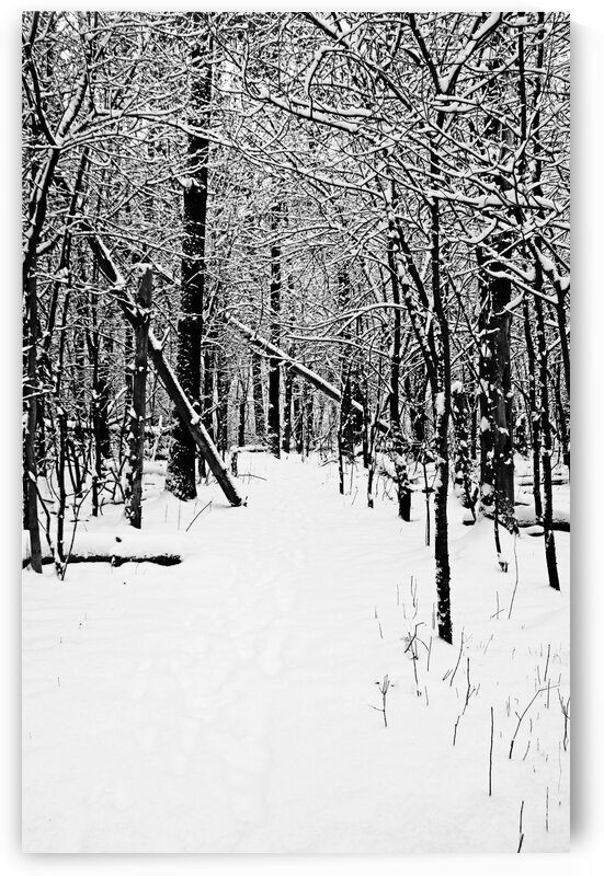 Cold And Crisp Winter Forest I Black And White by Deb Oppermann