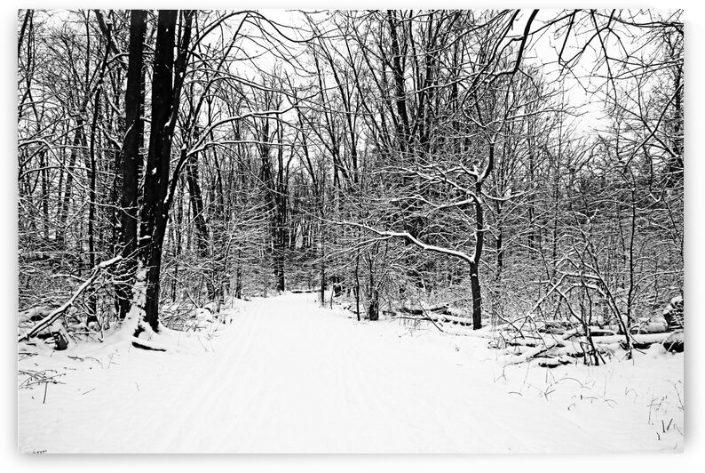 Walking A Winter Trail Black And White by Deb Oppermann