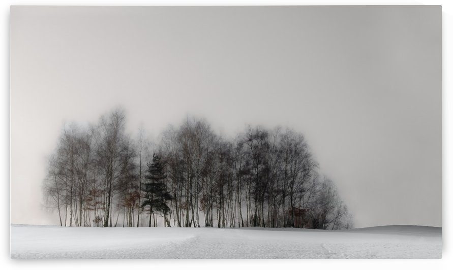 winter forest by Gilbert Claes  by 1x