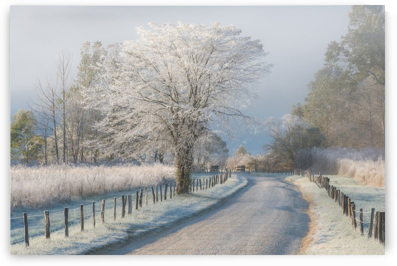 A Frosty Morning by 1x