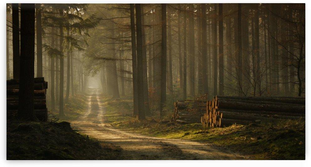 A forest walk by Jan Paul Kraaij by 1x