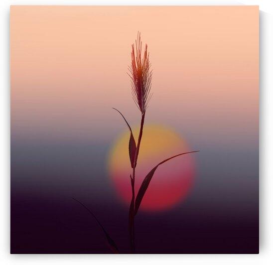 A spike of wheat against the backdrop of the setting sun. by Ievgeniia Bidiuk
