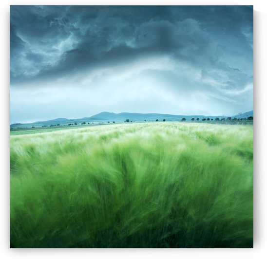 Barley Field by 1x