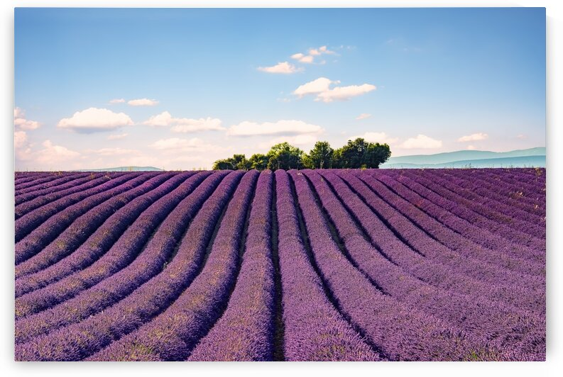 The Valensole plateau by Manjik Pictures