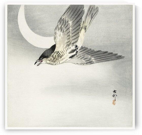 Cuckoo at crescent moon by Tony Tudor