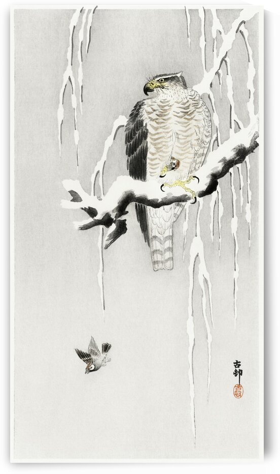 Hawk with captured ring sparrow by Tony Tudor