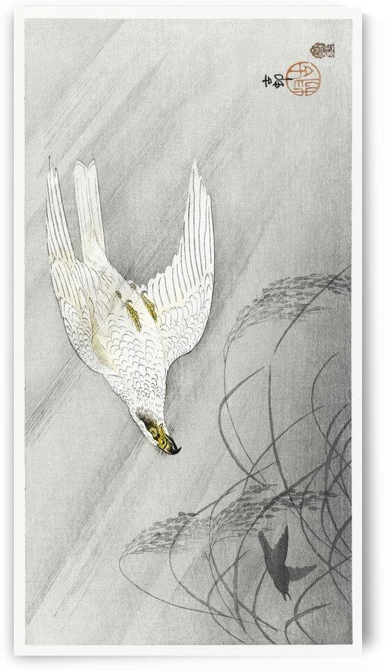 Hunting hawk by Tony Tudor