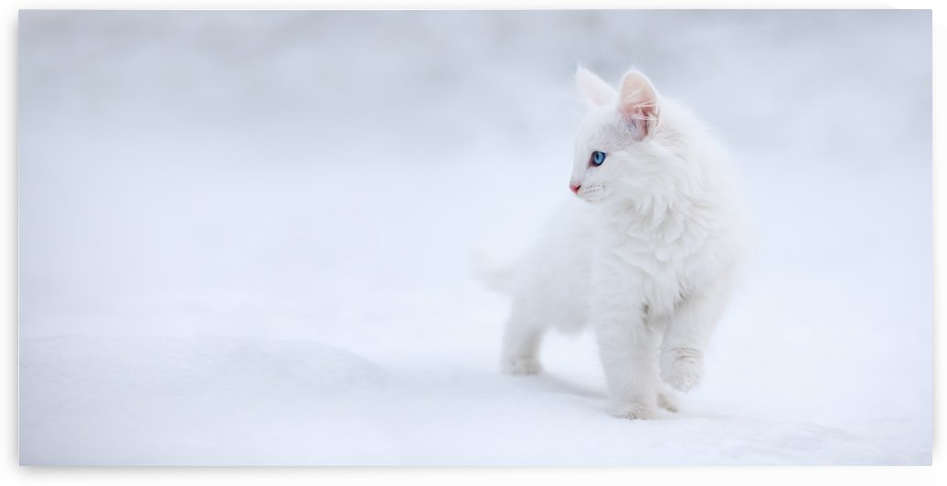White as Snow by 1x