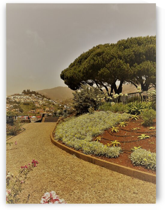 Madeira   A by AttoGraphy