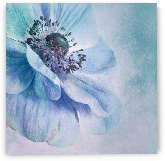 Shades of Blue by Priska Wettstein  by 1x