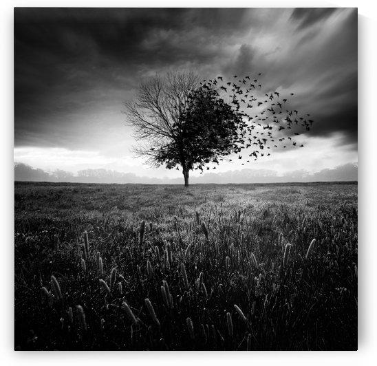 Illusion d'un printemps perdu by 1x