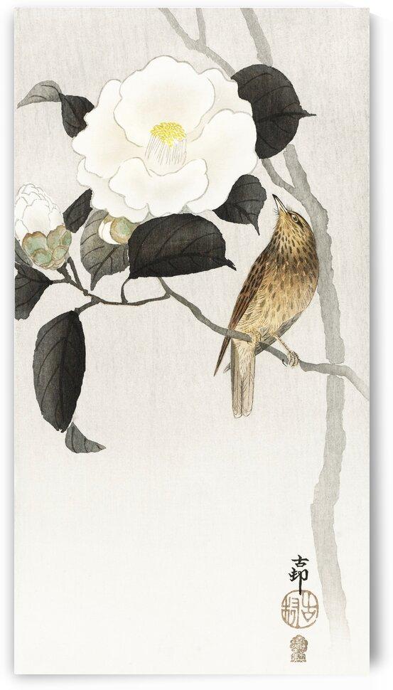 Songbird and flowering camellia by Tony Tudor