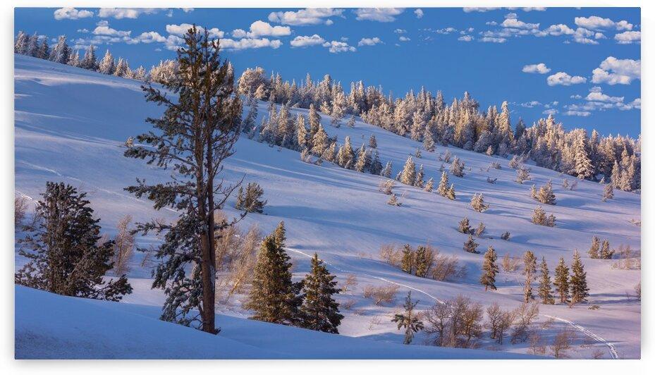 Blue Snow by Nicholas