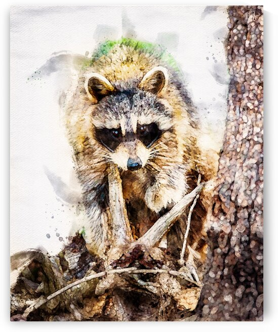 Raccoon In The Woods by Bob Orsillo