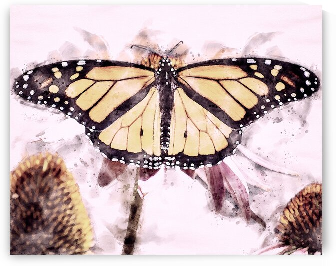 Monarch Butterfly by Bob Orsillo