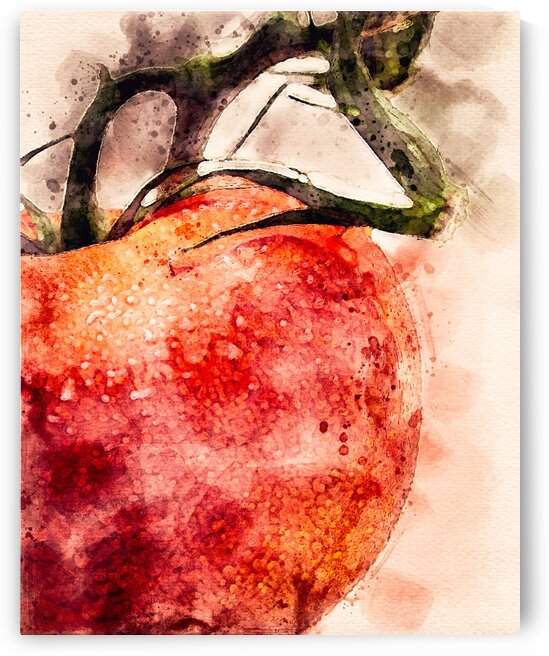 Tomato by Bob Orsillo