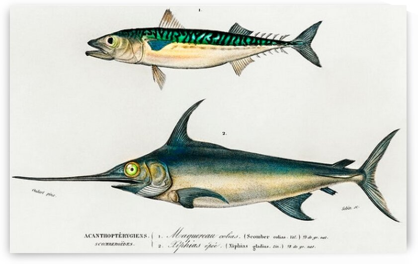 Different types of fishes illustrated  by Mutlu Topuz