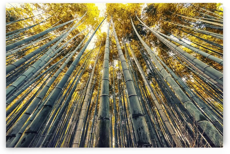 Bamboo grove by Manjik Pictures