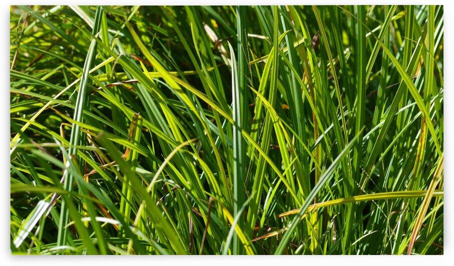 Grass by Christopher Lumpp
