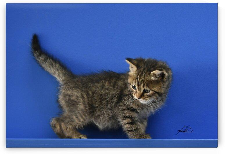 cats 337 copy by michael safieddine