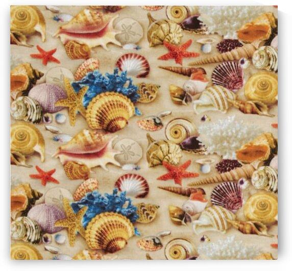 Shells Sand by Mutlu Topuz