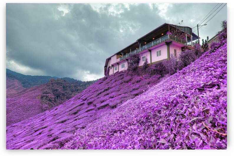 Beige Painted House on the slope   Infrared   Purple by ASAR STUDIOS