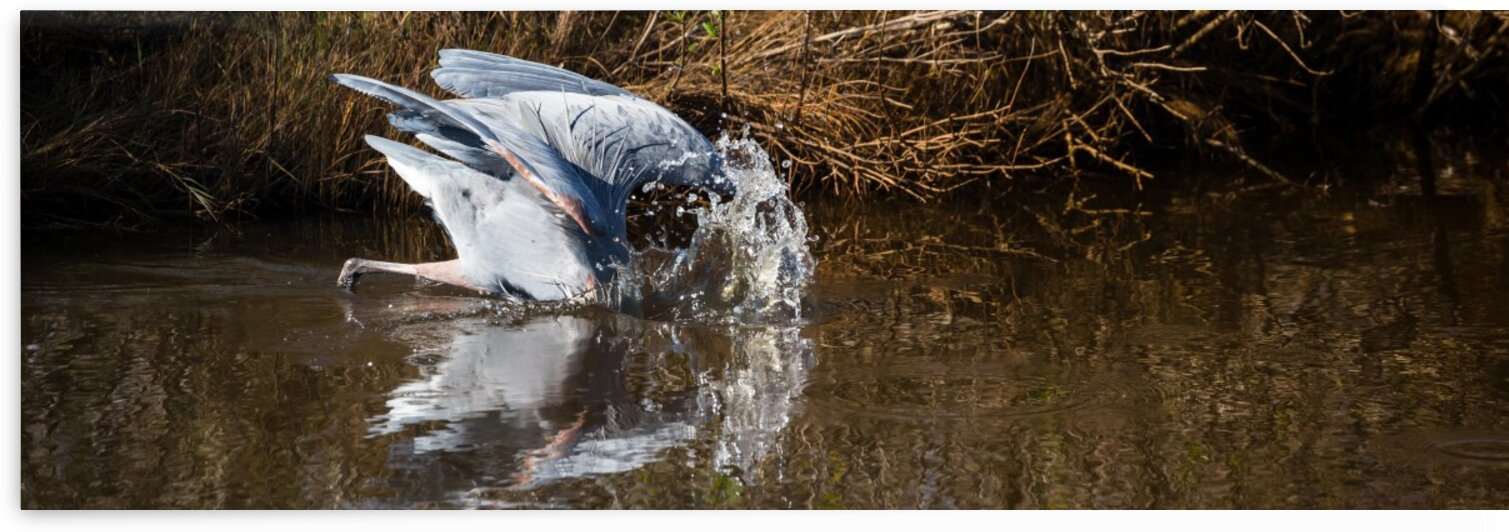 Great Blue Heron ap 2130 by Artistic Photography