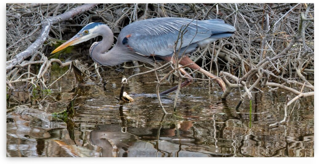 Great Blue Heron ap 2744 by Artistic Photography