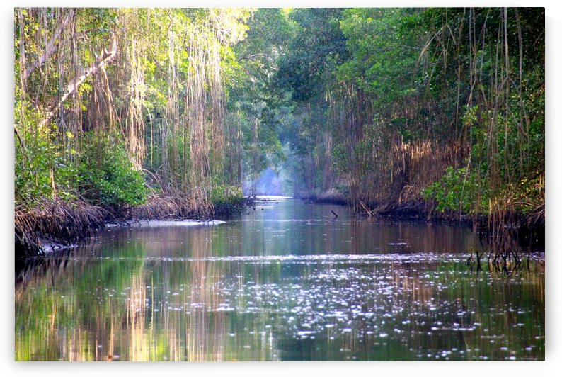 Caroni Swamp   Trinidad by Joanna Devaux Guillaume