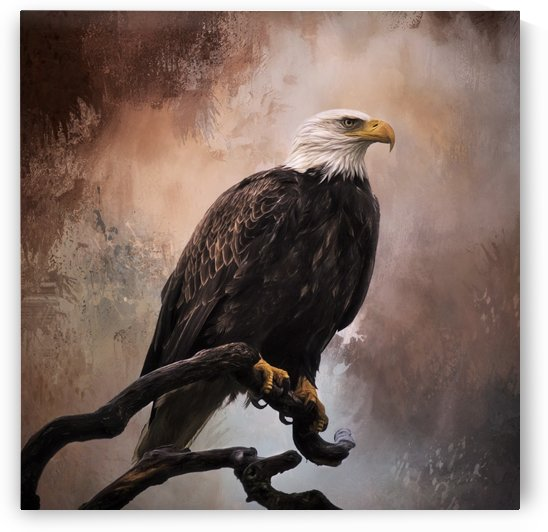 Looking Forward - Eagle Art by Jordan Blackstone by Jordan Blackstone