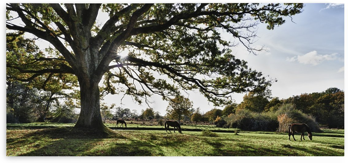 Horses in The New Forest by Adrian Brockwell