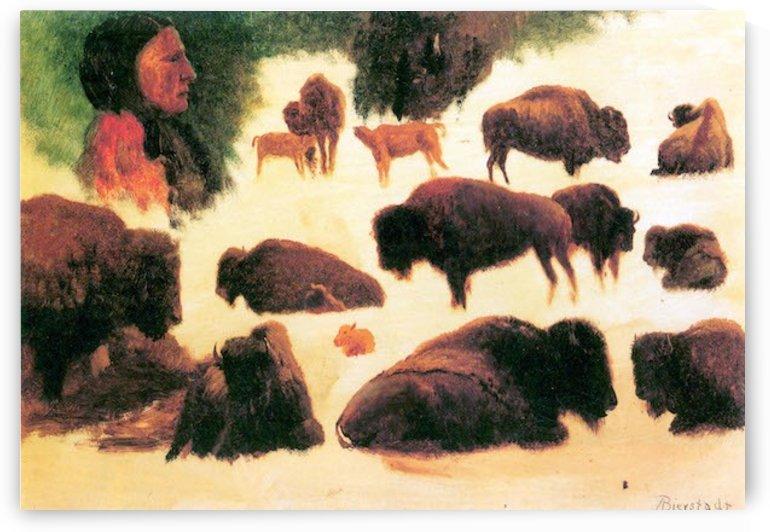 Study of Buffaloes by Bierstadt by Bierstadt
